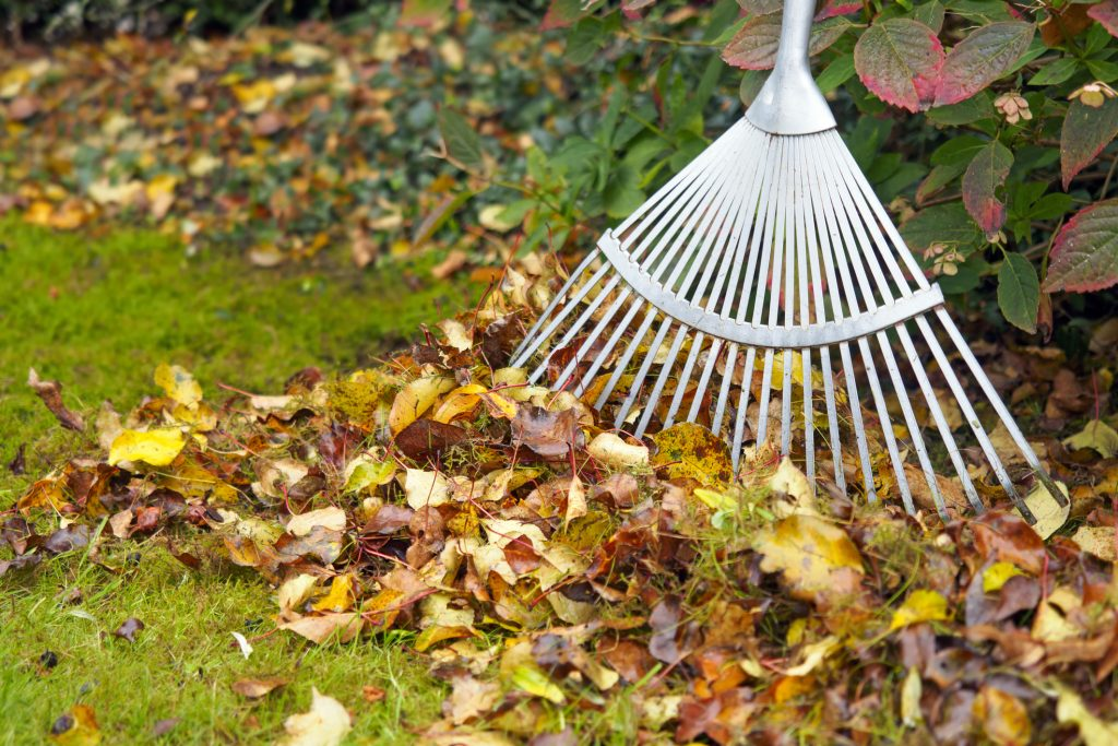 cleaning garden 1024x683 - How To Keep Your Yard Neat